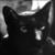 :iconobsidian-feline: