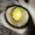 :iconobsidian-mongoose: