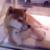 :iconolivia1701-x: