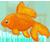 :iconoo-x-goldfish-x-oo:
