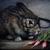 :iconoperabbit: