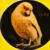 :iconorange-feathercanary: