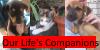 :iconour-lifes-companions: