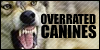 :iconoverrated-canines: