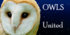:iconowls-united: