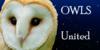 :iconowls-united: