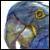 :iconpapagei-parrot: