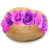 :iconpartybagels: