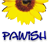 :iconpawish8: