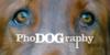 :iconphodographygroup: