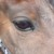 :iconphoenixfirewolf: