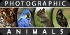 :iconphotographic-animals: