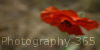 :iconphotography-365: