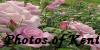 :iconphotos-of-kent: