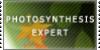 :iconphotosynexpertstamp: