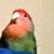:iconpikka-bird: