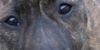 :iconpit-bull-support: