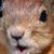 :iconpixelstalker666: