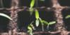 :iconplantcore-aesthetic: