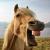 :iconplumberhorse: