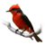 :iconplv-birdphoto:
