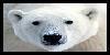 :iconpolar-bear-love:
