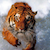 :iconprefect-turk-tiger: