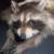 :iconprov12-10taxidermy: