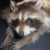 :iconprov12-10taxidermy: