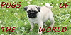 :iconpugfansoftheworld: