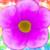 :iconpurpleflowerart: