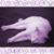 :iconpurplefluffycat: