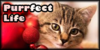 :iconpurrfect-life: