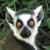 :iconrabid-lemur: