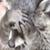 deviantart helpplz emoticon raccoonashamedplz
