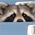 deviantart helpplz emoticon raccoonseeplz