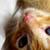 :iconrachel-kitty: