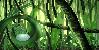 :iconraindrop-jungle: