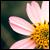 :iconrampagegraphics: