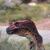 :iconraptor6012: