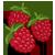 :iconraspberryhunter: