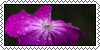 :iconraw-nature: