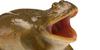 :iconreallyangryfrogs: