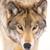 :iconred-alpha-wolf: