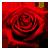 :iconred-roseplz: