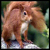 :iconred-squirrel: