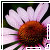 :iconredforlorn-rose: