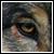:iconredwallbadger: