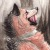 :iconredwolf2722: