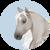 :iconrhaine-horses: